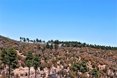 Prescott National Forest, Arizona, Etats-Unis Image libre de droits