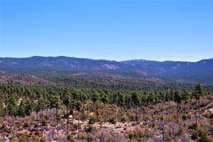 Prescott National Forest Arizona, Förenta staterna Arkivbild