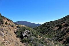 Prescott National Forest, Arizona, Stati Uniti Fotografie Stock Libere da Diritti