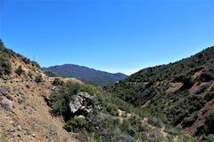 Prescott National Forest, Arizona, Vereinigte Staaten Lizenzfreie Stockfotos