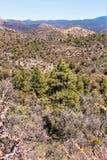 Prescott National Forest, Arizona, Vereinigte Staaten Lizenzfreie Stockfotografie