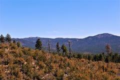 Prescott National Forest, o Arizona, Estados Unidos Imagem de Stock