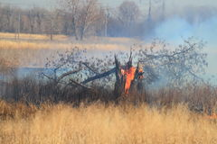 Prescribed burn of weeds Royalty Free Stock Photo
