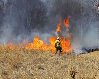 Prescribed Controlled Prairie Burn. A forester watches a prescribed controlled prairie burn as the flames rise royalty free stock images