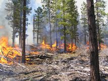 Prescribed Fire Royalty Free Stock Photos