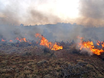 Prescribed Fire Royalty Free Stock Image