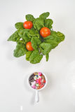 Prescription Pills and Medicine Medication Drugs versus Spinach Salad Royalty Free Stock Image
