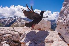 Prese dell'uccello dalla roccia fotografia stock