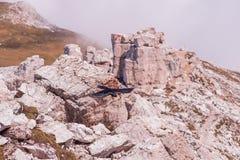 Prese dell'uccello dalla roccia fotografia stock libera da diritti