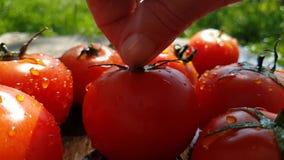 Prese lente della mano dell'acqua del gocciolamento di cadute dei pomodori video d archivio
