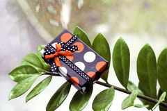Present box on green leaves Stock Photos