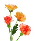Present flowers Stock Images