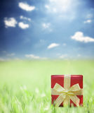 Present on grassy background Stock Photography