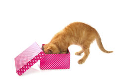 Present for kitten Royalty Free Stock Images