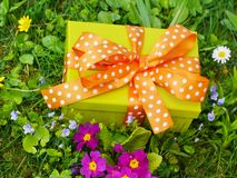Present lawn Royalty Free Stock Image