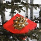 Present in tree. Stock Photo