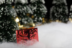 Present in wrapped gift box in forest Royalty Free Stock Photos
