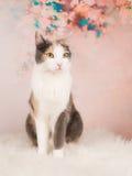 Presentación bonita del gato Foto de archivo libre de regalías