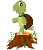 Presentación de la tortuga de la historieta Imagen de archivo libre de regalías