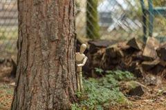 Presentación de madera del maniquí Fotos de archivo