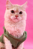 Presentación del gatito Imagen de archivo