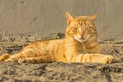 Presentación del gato imagen de archivo