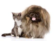 Presentación del gato y del perro Aislado en el fondo blanco Fotos de archivo