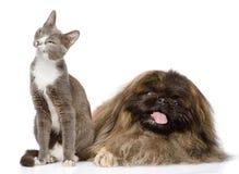Presentación del gato y del perro En el fondo blanco Foto de archivo libre de regalías