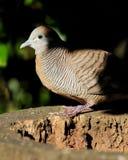 Presentación gris del pájaro Imagen de archivo