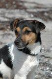 Presentación mojada del perro Fotos de archivo libres de regalías