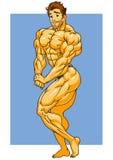 Presentación muscular del bodybuilder Imagen de archivo libre de regalías