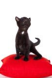 Presentación negra joven del gatito Foto de archivo