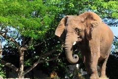 Presentación del elefante Fotos de archivo libres de regalías