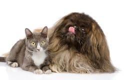 Presentación del gato y del perro Aislado en el fondo blanco Fotografía de archivo