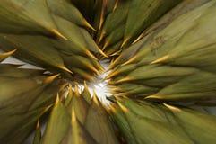 Presentation of artichokes on plate. Presentazione di carciofi su piatto,carciofi,artichokes stock photos