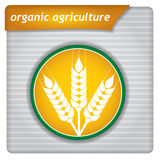 Presentation template - organic agriculture Stock Photography