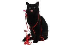 Presente 2 do gato preto do Natal Fotografia de Stock Royalty Free