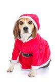 Presente de época natalícia do Natal de Santa do animal de estimação Imagem de Stock Royalty Free