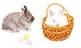 Presente dos coelhinhos da Páscoa e dos ovos Fotos de Stock Royalty Free