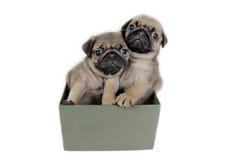 Presente de los perritos. Foto de archivo