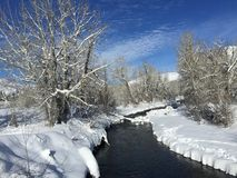 Presente de Natal do dia do azulão-americano de Sun Valley Foto de Stock