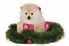 Presente de Natal do filhote de cachorro Imagens de Stock