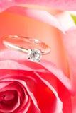 Presente de Rosa com uma surpresa Imagens de Stock Royalty Free