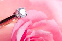 Presente de Rosa com uma surpresa Fotos de Stock Royalty Free