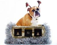 Presente del perrito del dogo Fotografía de archivo