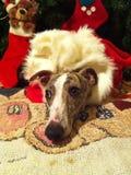 Presente do cão para o Natal Fotografia de Stock Royalty Free