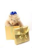 Presente do urso da peluche imagem de stock