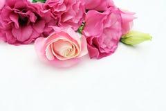 Presente e flor Foto de Stock Royalty Free