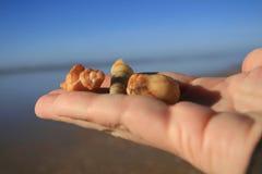 Presentes do oceano Fotos de Stock Royalty Free