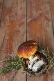 Presentes incomuns da floresta da cesta Imagem de Stock Royalty Free